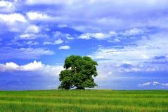 пасмурный зеленый вал неба Стоковое Фото