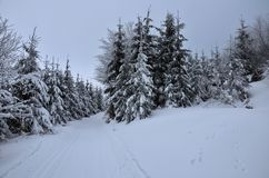 Пасмурный путь зимы Стоковое фото RF