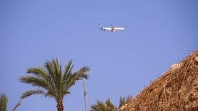Пассажирский самолет в посадке неба на предпосылке гор и пальм в Египте сток-видео