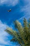 Пассажирский самолет уходит Египет Стоковые Изображения RF