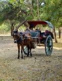 Пассажиры тележки лошади ждать в Bagan, Мьянме Стоковые Изображения RF