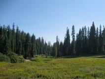 Пастбище в национальном парке секвойи Стоковые Фотографии RF
