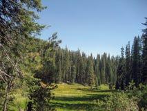 Пастбище в национальном парке секвойи Стоковые Изображения RF