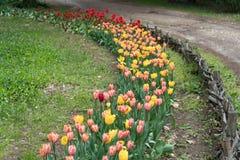 Пастбище с красочными тюльпанами, ботанический сад, Варна стоковые изображения rf