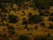 Пастбище sward прерии Пампаса мёда луга травы дерева зеленое желтое Стоковые Фото