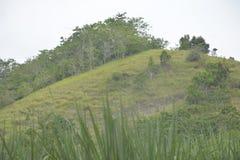 Пастбищно-выпасное хозяйство на холмах в Mahayahay, Hagonoy, Davao del Sur, Филиппинах стоковые изображения rf