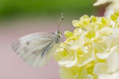 Пастельная картина бабочки Стоковое фото RF