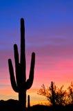 пастельный заход солнца Стоковая Фотография RF