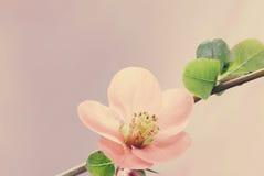 Пастельная весна тонов стоковое фото rf