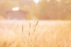 Пастельное поле Стоковая Фотография
