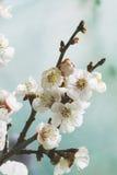Пастельное цветение весны тонов стоковое фото rf
