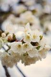 Пастельное цветение весны тонов стоковое изображение