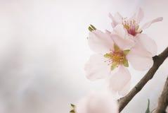 Пастельный макрос цветения весны тонов стоковые фото