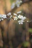 Пастельный макрос цветения весны тонов стоковые фотографии rf