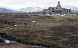 Пасти дикий с руинами стоковые изображения rf