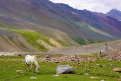 Пасти и trekkers осла идя вниз с холмов Стоковые Фотографии RF