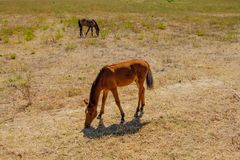 Пасти лошадей в Италии Стоковая Фотография