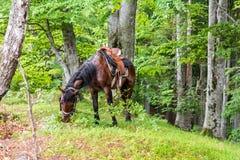 Пасти лошадь Стоковые Фотографии RF