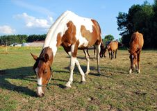 пасти лошадей Стоковые Фото