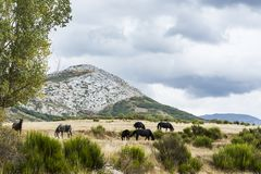 пасти лужок лошадей стоковые изображения rf