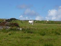 пасти лошадей Стоковые Фотографии RF