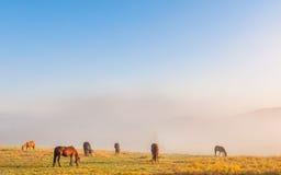пасти лошадей Стоковое Изображение
