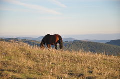 пасти лошадь Стоковая Фотография RF