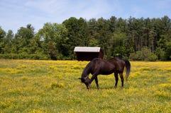 пасти лужок лошади Стоковое фото RF