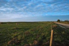 пасти Стоковая Фотография RF