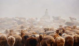 Пастухи казаха в Синьцзян стоковое фото
