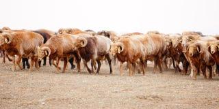 Пастухи казаха в Синьцзян стоковое изображение