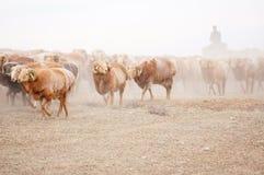Пастухи казаха в Синьцзян стоковые изображения
