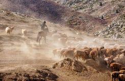 Пастухи казаха в Синьцзян стоковое фото rf