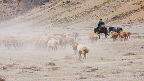 Пастухи казаха в Синьцзян стоковая фотография rf