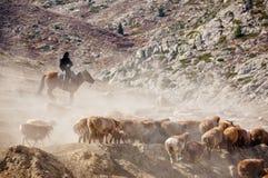Пастухи казаха в Синьцзян стоковые фотографии rf