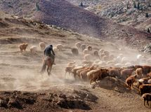 Пастухи казаха в Синьцзян стоковые изображения rf