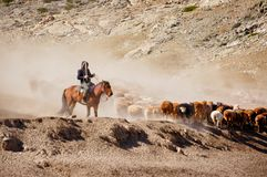 Пастухи казаха в Синьцзян стоковые фото