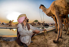 Пастух верблюда Стоковые Фото