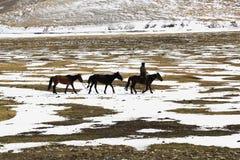 Пастух Стоковые Изображения RF