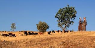Пастух Стоковая Фотография RF