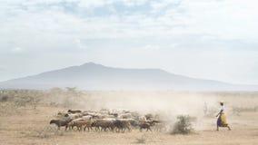 пастух Стоковые Фотографии RF