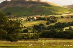 Пастырский мир в Borrowdale, районе Англии озера Стоковые Фотографии RF