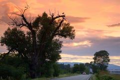 Пастырский пейзаж лета Стоковые Фотографии RF