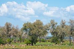 Пасущ импал и птиц в Восточной Африке - запасе игры национального парка selous в Танзании стоковые фотографии rf