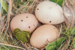 Пасхальное яйцо в гнезде на деревенских деревянных планках Стоковое фото RF