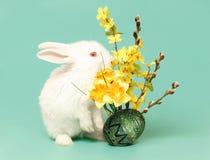 пасхальное яйцо зайчика Стоковая Фотография RF