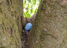 Пасхальное яйцо со стикерами на ем спрятано в обманщике дерева стоковая фотография