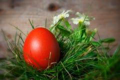 пасхальное яйцо цветет красный цвет Стоковые Фото