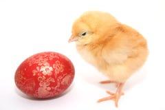 пасхальное яйцо цыпленка младенца Стоковое фото RF