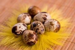 Пасхальные яйца в гнезде на предпосылке цвета деревянной Натюрморт пасхи с цветками, гнездом, пер и яичками Стоковое Изображение RF